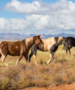 Horses CBD