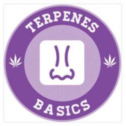 terpenes basics